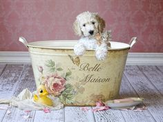 Bella Maison Painting by Lisa Jane