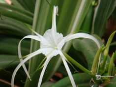 A flower star.