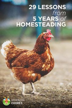 If you're just getting started, it's best to learn from someone else's experience. These are what I've learned these past 5 years as a homesteader.