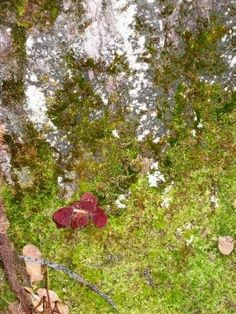 Weather Folklore of the Day:  When the mountain moss is soft and limpid, expect rain, If dry and brittle, expect clear weather.