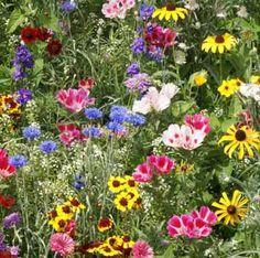 Hancock Farm & Seed Company - Lawn, Pasture and Turf Grass Seed Beautiful Gardens, Beautiful Flowers, Flower Landscape, Landscape Design, Garden Design, California Poppy, Wildflower Seeds, Grass Seed, Black Eyed Susan