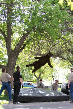 Students at the University of Colorado have won an award for their Wildlife Levitation project.