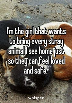 My boyfriend call me the pet detective because I always on the watch for a animal in need.