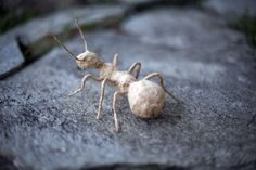 Wire Insect Ant Collectible Insect Sculpture Animal