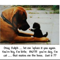 let me explain funny cute animals cat dog pets lol kitten humor funny animals. Of COURSE! Animals And Pets, Baby Animals, Funny Animals, Cute Animals, Funny Dogs, Animal Funnies, Animal Babies, Small Animals, I Love Cats