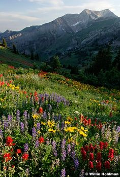 Cottonwood Canyons, Wasatch, Salt Lake City, Utah