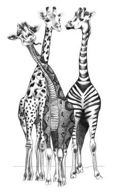 Funny Giraffes