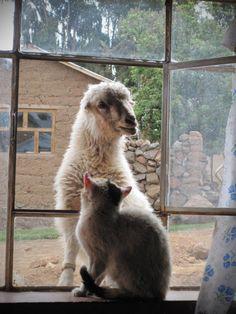 Sheep & Cat Friends