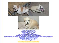 http://www.savingbrokenangels.com/post/greenvilles-c-these-poor-dogs-born-only-to-die-8197622?pid=1293000294#post1293000294