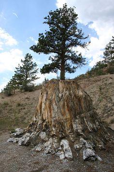 9. Florissant Fossil Beds National Monument (Florissant)