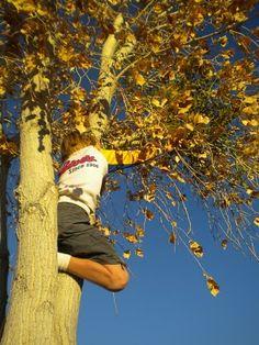 Miles braves a tall cottonwood to gather mistletoe. #elpaso