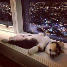 Sleeping in the big city.