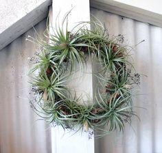 air plant wreaths -- so cool!