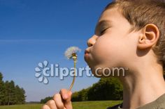 Clipart.com Closeup   Royalty-Free Image of activity,aspirations,beautiful,blow,blowing,blue,boy,child,childhood,cute,dandelion,day,enjoyment,family,flower,flowers,freedom,fun,green,hand,human,innocence,kid,leisure,lips,may,nature,outdoors,people,plant,play,playful,sky,spring,summer,sun,wish,young