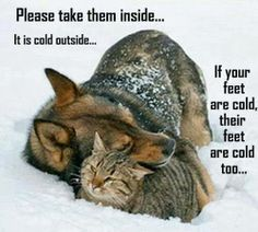 This extreme cold is very bad for animals/pets to be outside and even worse for senior pets! Just letting my senior dogs out for barely one minute I seen the effects. Please, even when letting pets out, keep a close eye on them and don't let them out long!