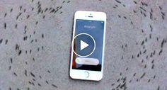 iPhone Faz Formigas Andarem Em Círculo Em Vídeo Que Está a Tornar-se Viral http://www.funco.biz/iphone-formigas-andarem-circulo-em-video-que-esta-a-tornar-se-viral/