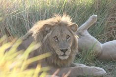 The Majesty of Southern Africa's Wilderness Exploring the World's Finest Safari Camps Tree Camping, Camps, Wilderness, Exploring, Safari, Southern, Africa, World, Travel