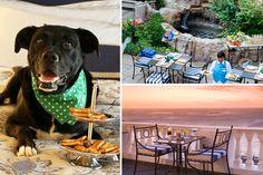 15 pet-friendly restaurants in Cape Town
