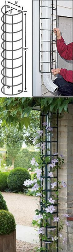 Hide the downspout with a trellis. Hide your rain spout by transforming into a decorative climbing support for your favorite flowering climbing vine. I really like this idea and it looks great too. YOUR GARDEN ART PROJECT IS WAITING FOR YOU. Diy Garden, Garden Trellis, Dream Garden, Lawn And Garden, Garden Projects, Garden Art, Home And Garden, Garden Ideas, Party Garden