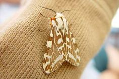 How to Get Rid of Moths? How to get rid of moths? Home remedies for moths. Natural remedies to get rid of moths fast. Top methods to kill moths at home. Treatment to kill moths. Homemade Fruit Fly Trap, Getting Rid Of Moths, Get Rid Of Squirrels, Dried Lavender Flowers, Natural Pesticides, Best Pest Control, Pest Management, Fly Traps, Recipes