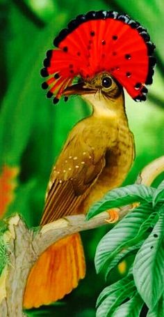 Abubilla Cresta Roja Pretty Birds, Beautiful Birds, Animals Beautiful, Cute Animals, Rare Birds, Exotic Birds, Colorful Birds, Bird Pictures, Nature Pictures