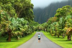 I recently spent three weeks exploring the island of Oahu, Hawaii which is why I decided to share with you the best things to do in Oahu Stuff To Do, Things To Do, Oahu Hawaii, Botanical Gardens, Places To Visit, Hiking, Country Roads, Island, Explore