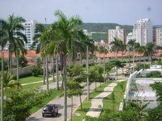 Las palmeras hoy inundan a #Barranquilla