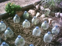 ~protect seedlings in early spring | vegetable garden~