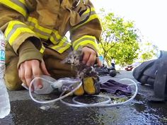 Cat Video: Firefighter Saves Kitten's Life.  Grab a few tissues and watch a fire fighter revive and save a kitten's life! 5 million views. -  http://www.catfaeries.com/videos/2016/04/18/cat-video-firefighter-saves-kittens-life/ - www.catfaeries.com - Products for good behavior & health for the modern housecat.