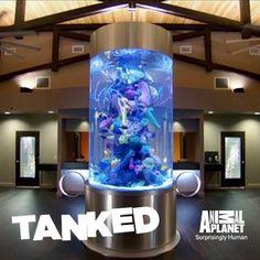 Syringe Fish Tank