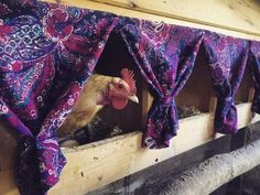 Nesting box curtains for the chicken coop