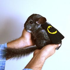 16 Pets That Don't Care About Your Dog's Halloween Costume