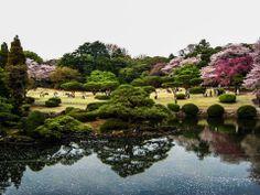 Japan - Holy tree