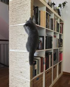 The IKEA Kallax line Storage furniture is an important section of any home. They provide get and help you keep track. Elegant and wonderfully simple the corner Kallax from Ikea , for example. Ikea Cat, Ikea Ikea, Cat Climbing Wall, Ikea Kallax Hack, Cat Hacks, Ikea Hacks For Cats, Ikea For Cats, Diy Cat Tree, Cat Shelves