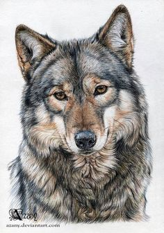 14 Awesome Wolf Tattoos For Women and Men