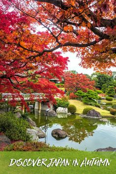 Discover the beauty of Japan in autumn along the Golden Route. #Japan #Osaka #Kyoto #Tokyo via @2aussietravellers