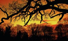 Sunset and silhoutte by octa_rayan, via Flickr