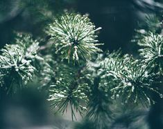 Pine Photograph, Forest photo Print, Green wall decor, Tree photography, Fine Art photograph, Nature Print, Nature wall art, Greenery decor