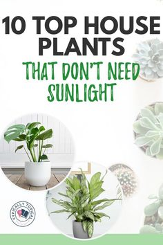 10 Of The Best Indoor Plants That Don't Need Sunlight - Typically Topical Plants That Like Shade, Acid Loving Plants, Shade Plants, Best Indoor Plants, Outdoor Plants, Outdoor Gardens, Colorful Plants, Cool Plants, Water Plants