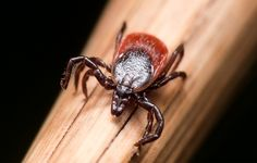 The medical world is at war with itself over Lyme. Meanwhile, your threat is dramatically rising.
