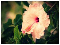 Flower - Rio Grande do Sul, Brasil