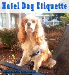 Vacations With Your Dog: Hotel Dog EtiquetteFinding a dog-friendly hotel can sometimes be challenging. Believe me, I know. I also understand why so many hotels have a no dog or no pet policy. What!? Why would a dog-crazy mom say that? Because some dog guardians are just plain rude and inconsiderate. When a dog owner travels with their dog, they have an obligation to be a very polite and unobtrusive guest. This goes for Fido too. Here are my top tips for good doggy hotel etiquette.