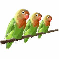 Drei bunte Papageie - Drei kleine bunte Papageie auf einer Stange hintereinander.