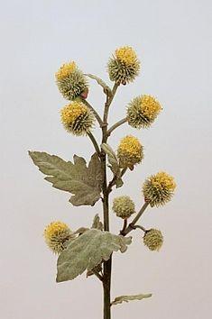 Ciulin HO galben - Alte flori artificiale la Pret Mic | Roberto Rossi Flora, Plants, Plant, Planets