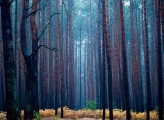 Autumnal hues - The Boston Globe