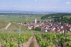 Wineck Schlossberg, Alsace France but it could be Castroville, Texas