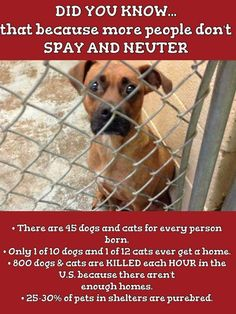 Please spay and neuter your pets! Millions of animals are euthanized in shelters every year  due to overpopulation. #adoptdontshop
