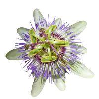 The Fifteen Most Fabulous Herbal Sedatives...http://www.kitchentablemedicine.com/herbalsedative/#