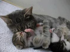 Aww Mummy that tickles!