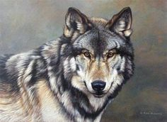 Timber Wolf...a beauty....